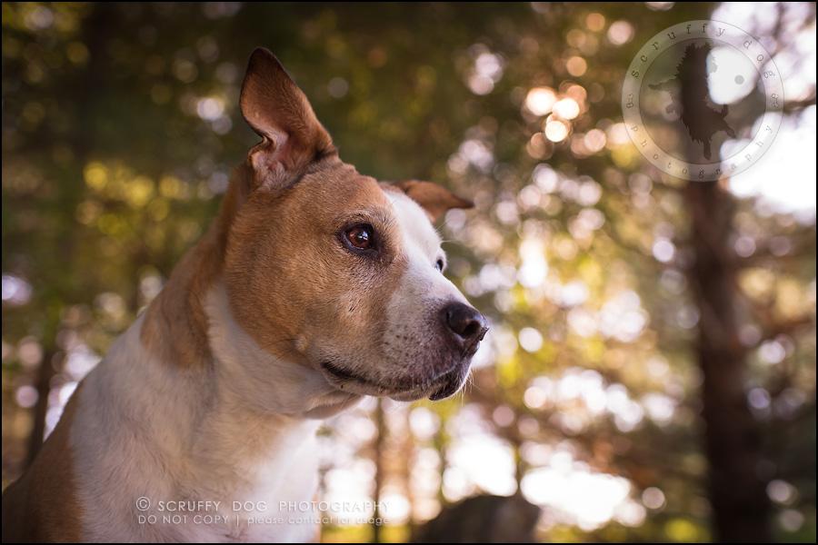 14-toronto-ontario-professional-pet-photographer-jade perry-156