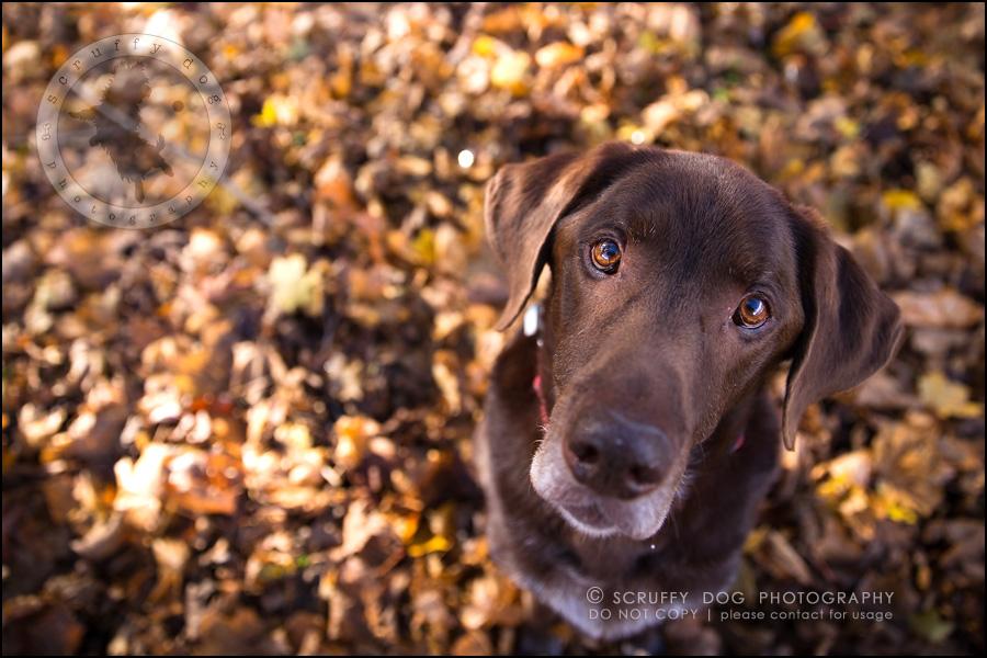 14-waterloo-ontario-best-professional-dog-photographer-max shoup-83