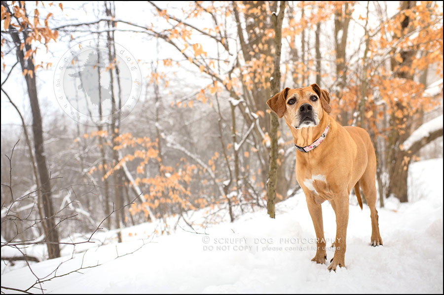 14-waterloo-ontario-professional--dog-photographer-best-makeda slinger-239