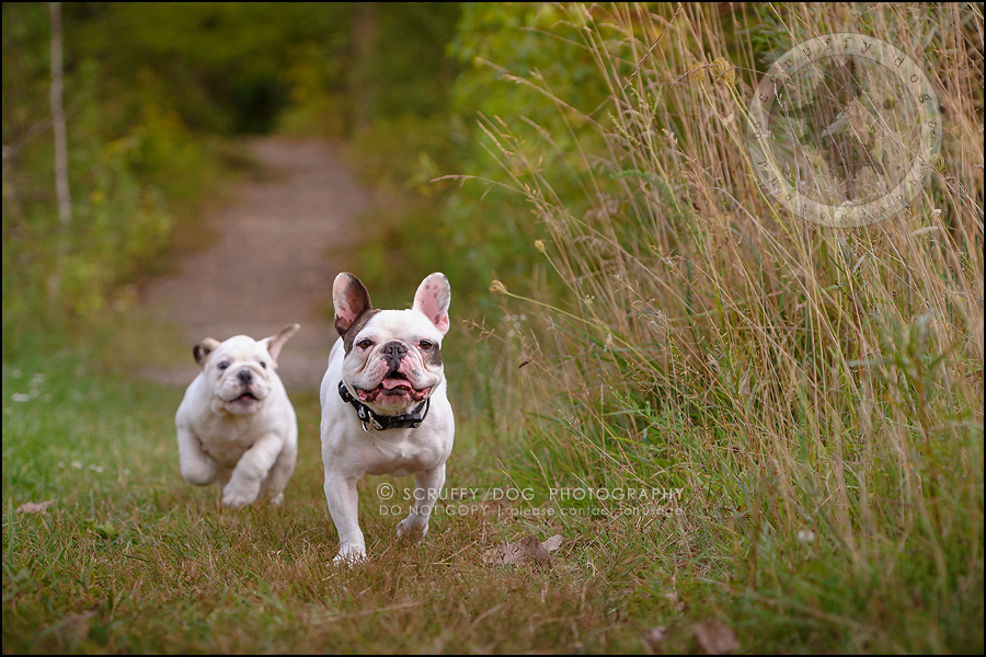 14_guelph_ontario_pet_photographer_best_dog_oliver eleanor fleming-337