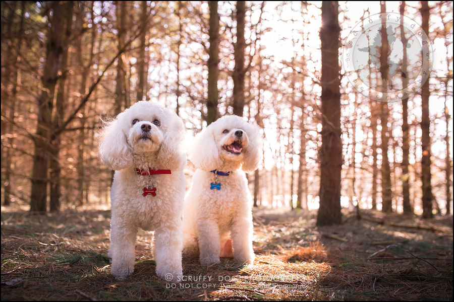 14_ontario_dog_stock_photography_dwss-579