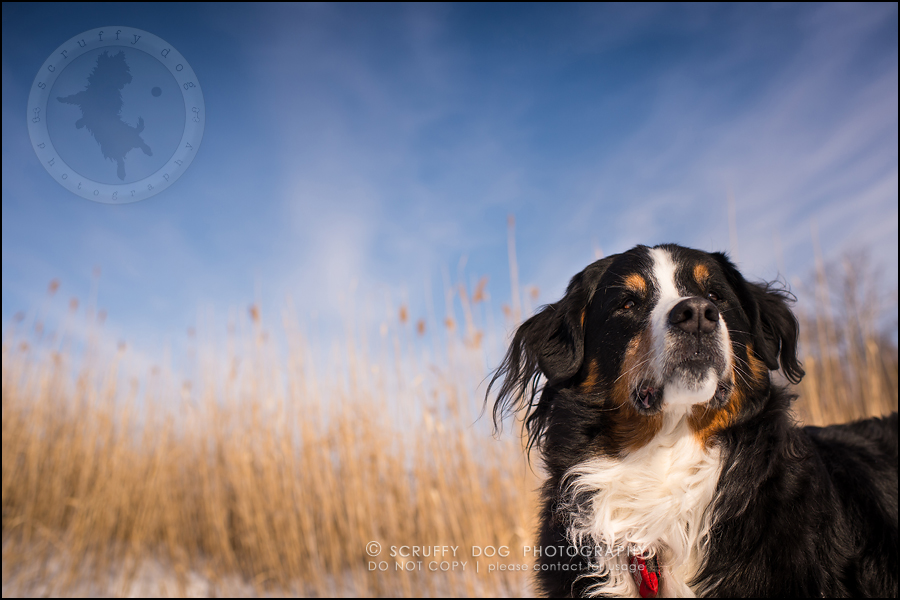 14_toronto_ontario_dog_stock_photography_grace zoe carr-513