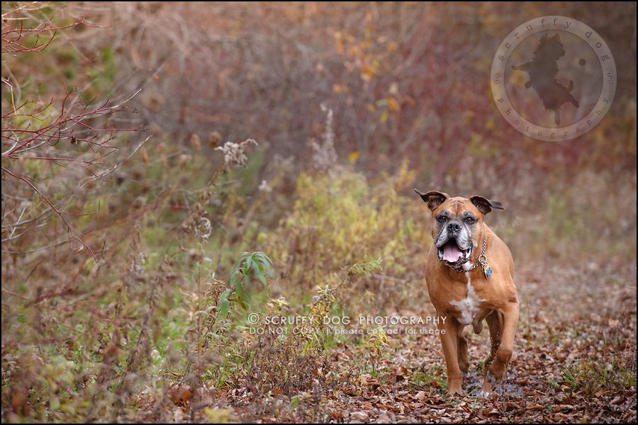15-brampton-ontario-best-professional-dog-photographer-moose rocket-330