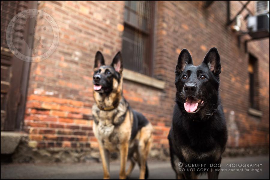 15-toronto-ontario-best-professional-pet-photographer-maya blitz-1218