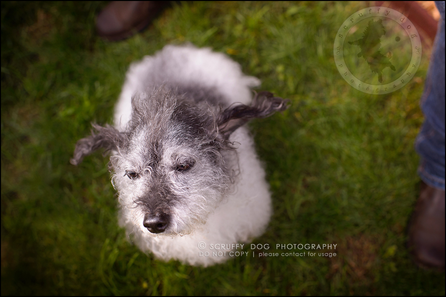 15-toronto-ontario-best-professional-pet-photographer-mika bobby worton-1141
