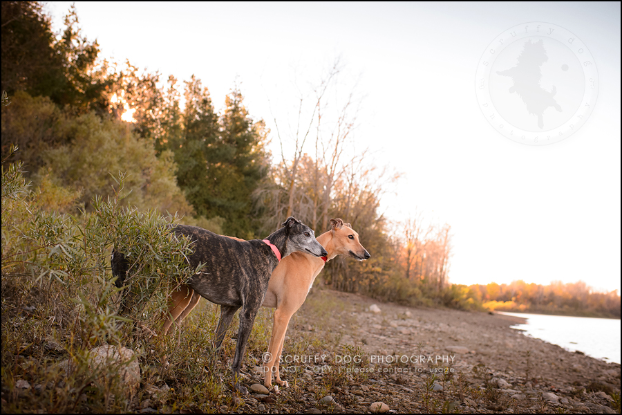 15-toronto-ontario-professional--dog-photographer-lucy poppy real-563