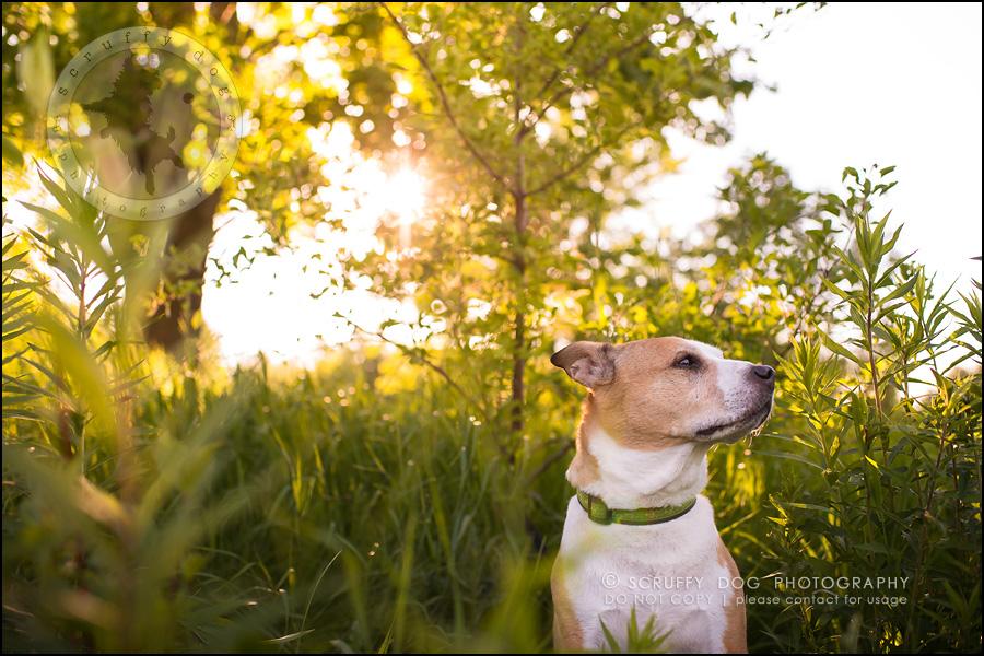 15-toronto-ontario-professional-pet-photographer-jade perry-510