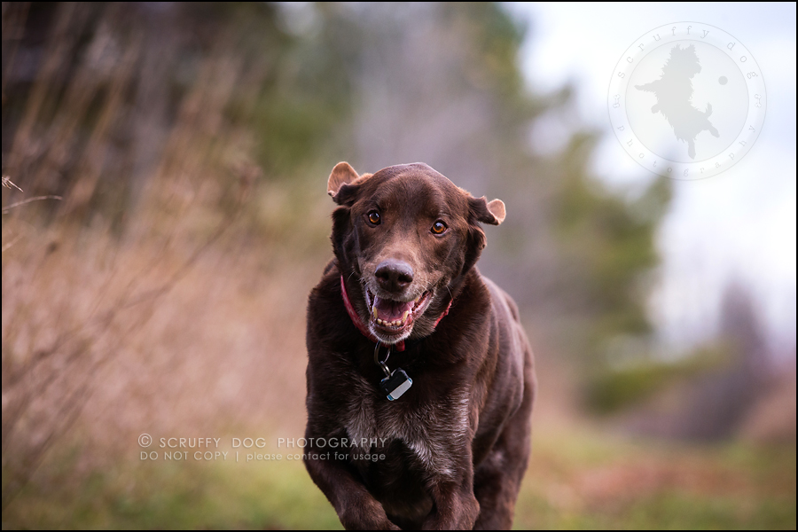 15-waterloo-ontario-best-professional-dog-photographer-max shoup-304