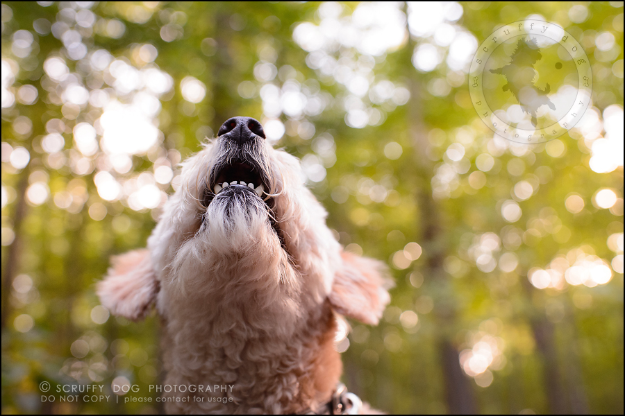 15-waterloo-ontario-dog-stock-photography-gulliver george-305