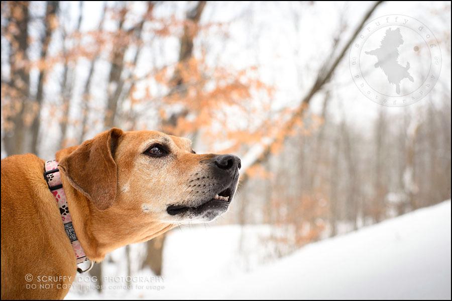 15-waterloo-ontario-professional--dog-photographer-best-makeda slinger-251