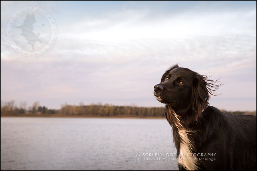 15-waterloo-ontario-professional-dog-photographer-hudson manning-812-Edit