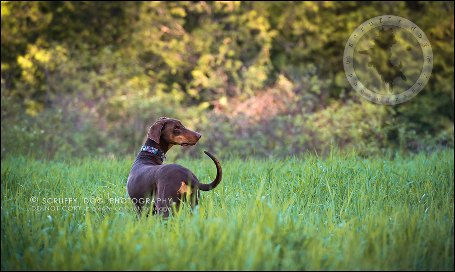 15_guelph_ontario_pet_photographer_best_dog_reese hunsberger-162