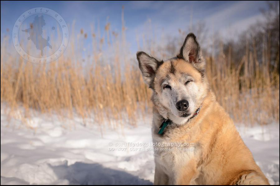 15_toronto_ontario_dog_stock_photography_grace zoe carr-527-Edit