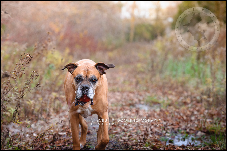 16-brampton-ontario-best-professional-dog-photographer-moose rocket-273