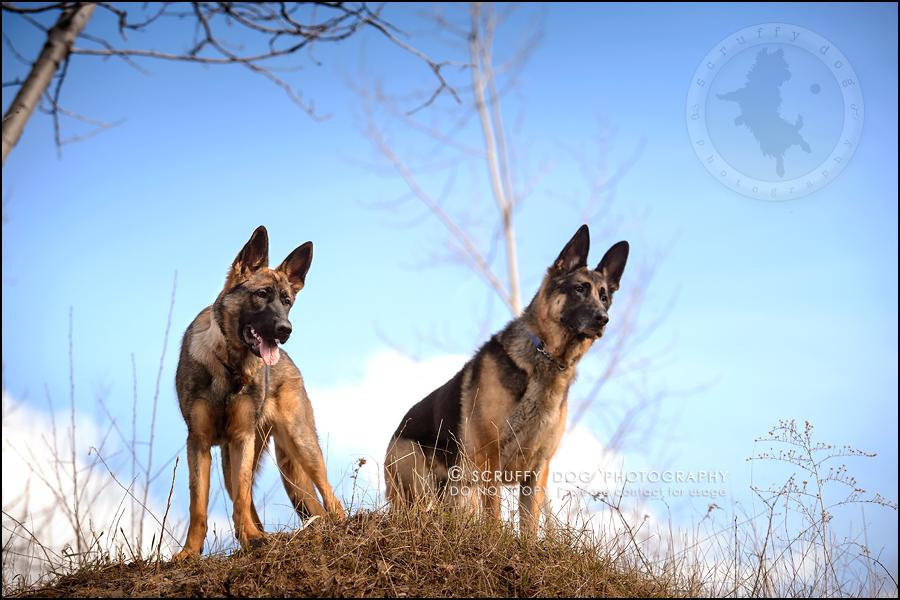 16-toronto-ontario-best-professional-pet-photographer-blitz zelda baker-363