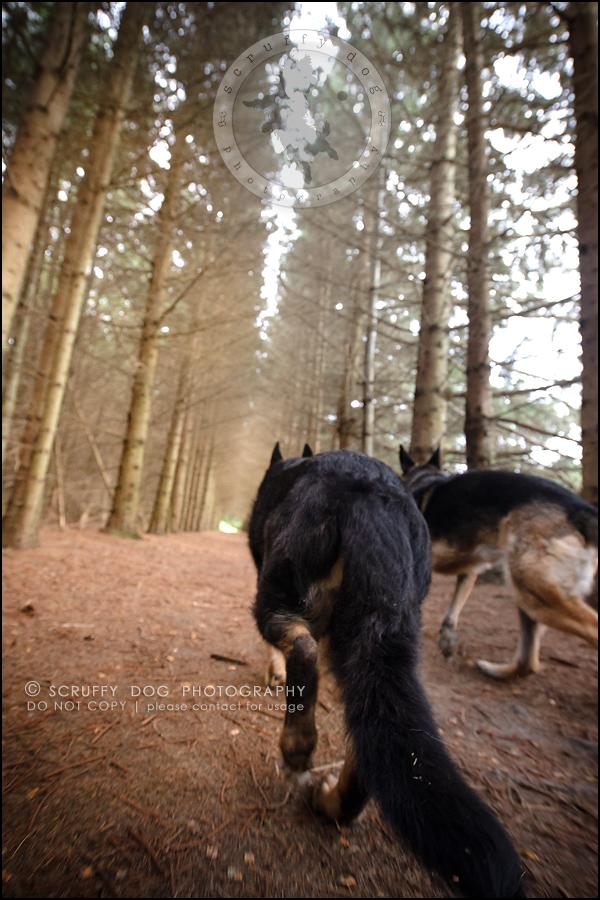 16-toronto-ontario-best-professional-pet-photographer-maya blitz-652