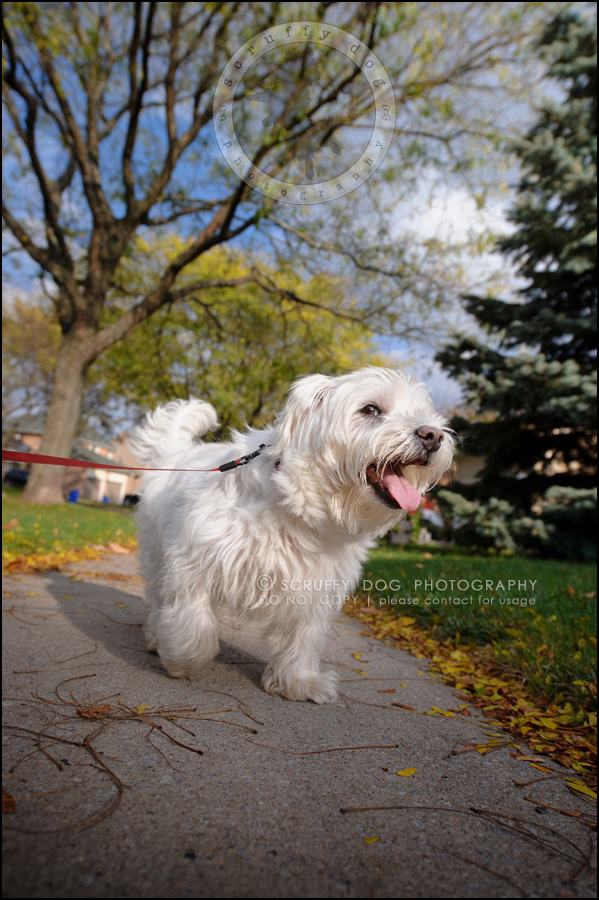 16-toronto-ontario-best-professional-pet-photographer-mika bobby worton-766