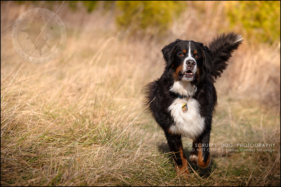 16-toronto-ontario-professional-dog-photographer-henry martha-201