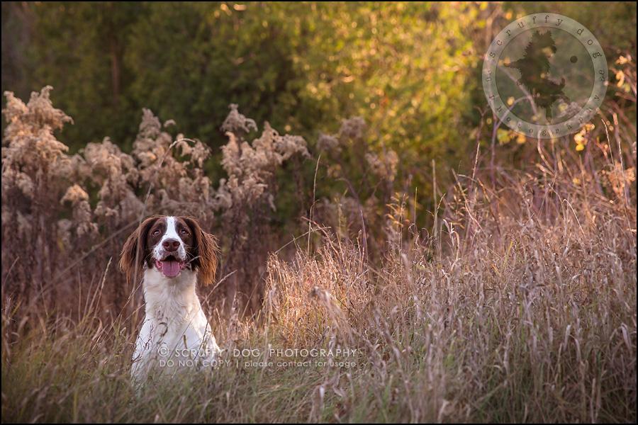 16-toronto-ontario-professional-pet-dog-photographer-jake boucher-295