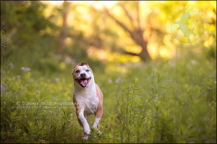 16-toronto-ontario-professional-pet-photographer-jade perry-307