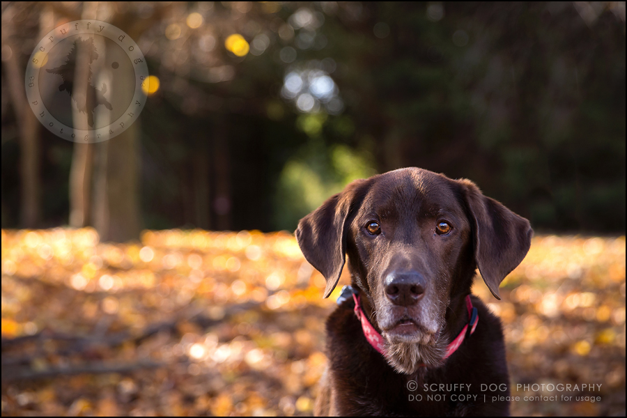 16-waterloo-ontario-best-professional-dog-photographer-max shoup-72