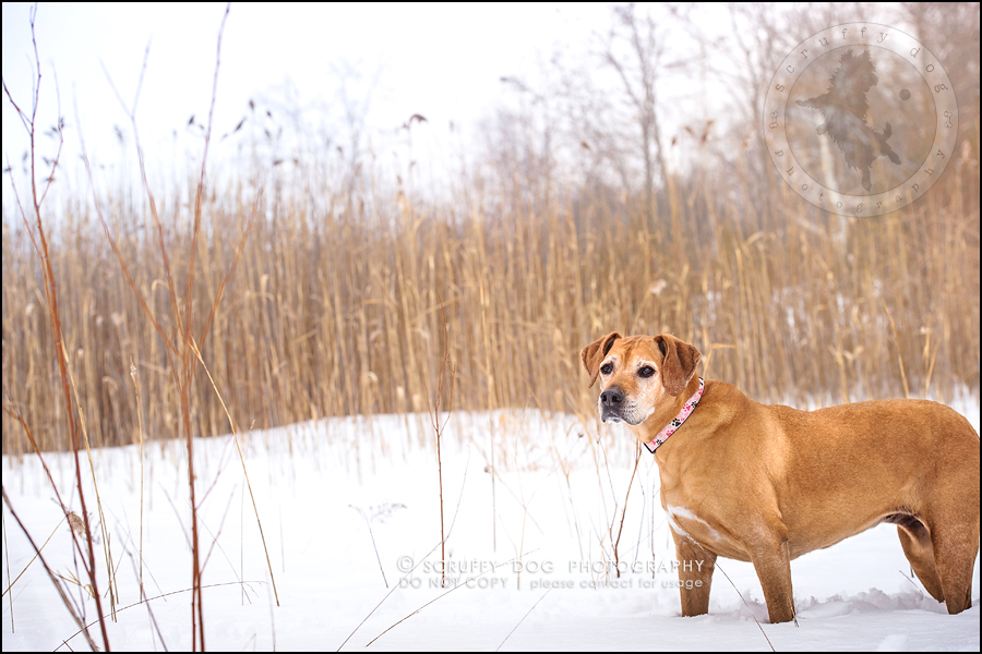 16-waterloo-ontario-professional--dog-photographer-best-makeda slinger-174