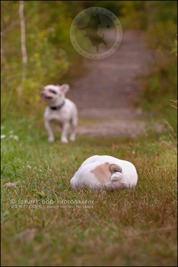 16_guelph_ontario_pet_photographer_best_dog_oliver eleanor fleming-329