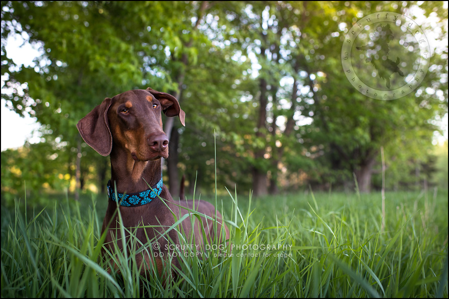 16_guelph_ontario_pet_photographer_best_dog_reese hunsberger-425