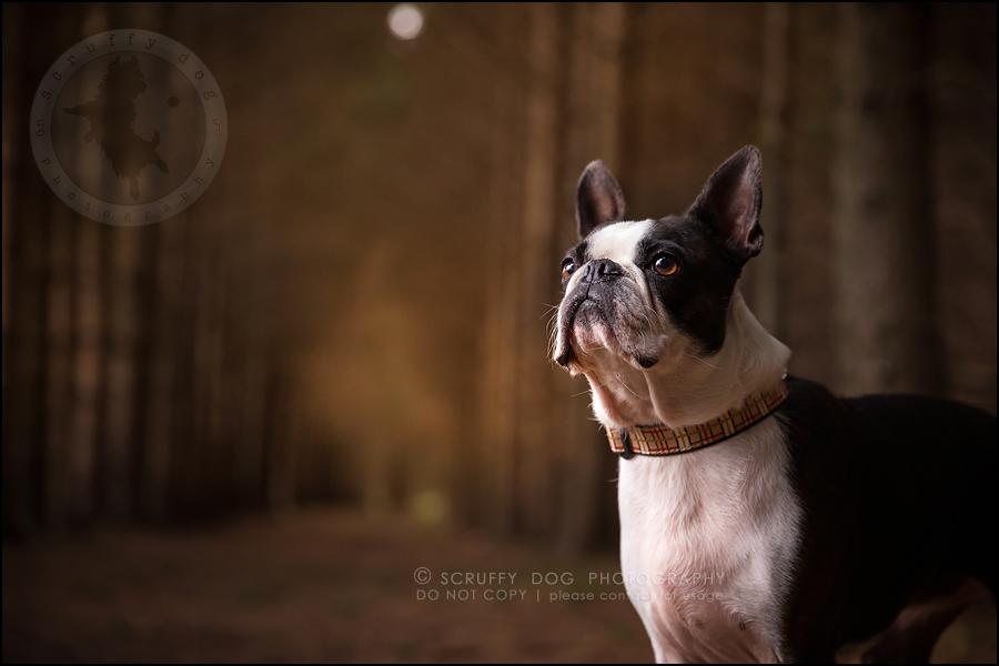 16_kitchener_ontario_pet_photographer_best_dog_princess dot carroll-78
