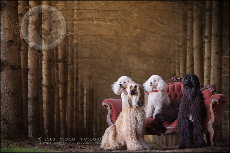 16_ontario_dog_stock_photography_dwss-539-Edit