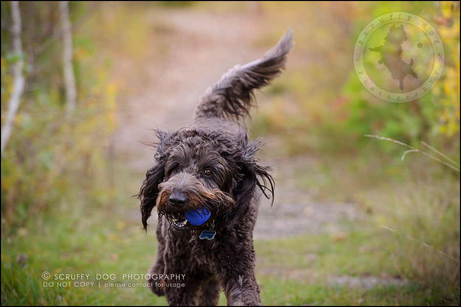 16_waterloo_ontario_best_pet_photographer_murphy odonovan-557