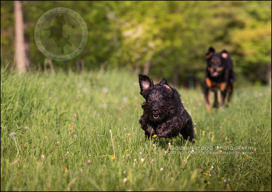 16toronto_ontario_dog_stock_photography_geordi jessie ladrillo-419