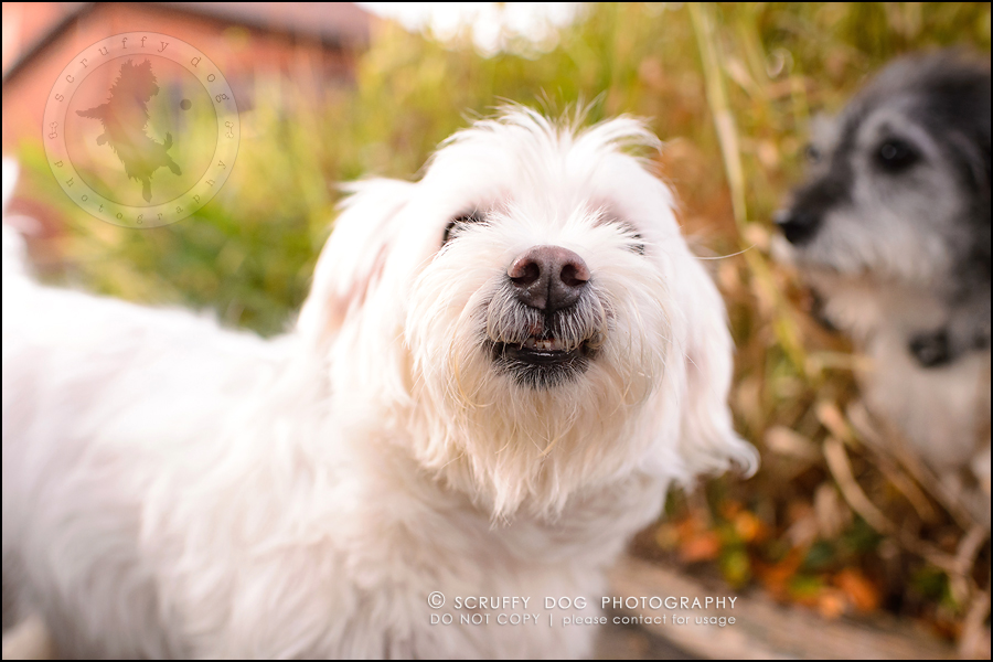 17-toronto-ontario-best-professional-pet-photographer-mika bobby worton-1202