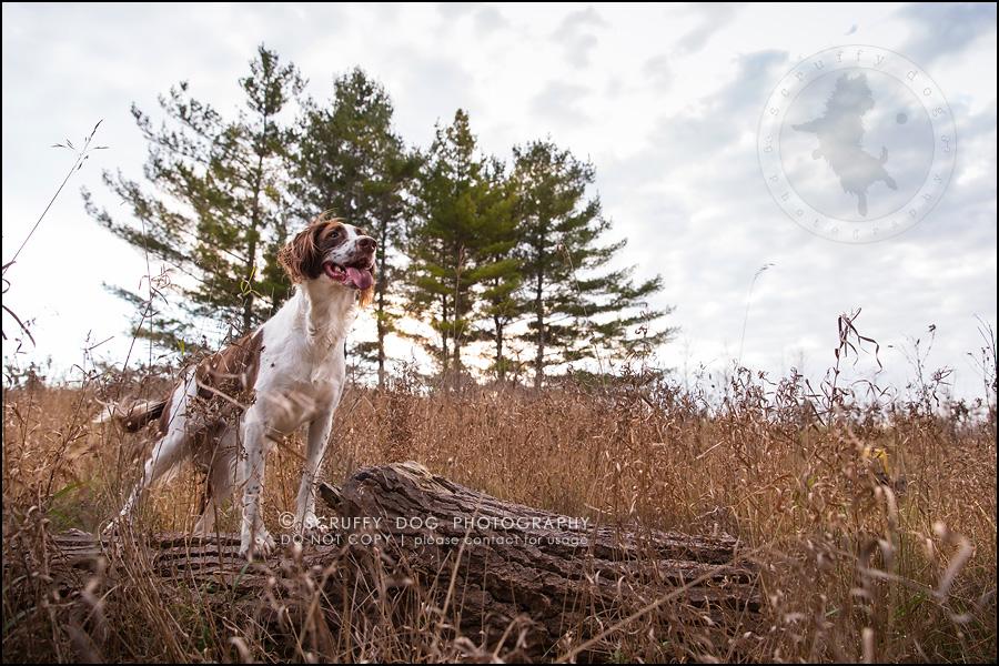 17-toronto-ontario-professional-pet-dog-photographer-jake boucher-577