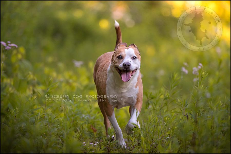 17-toronto-ontario-professional-pet-photographer-jade perry-334