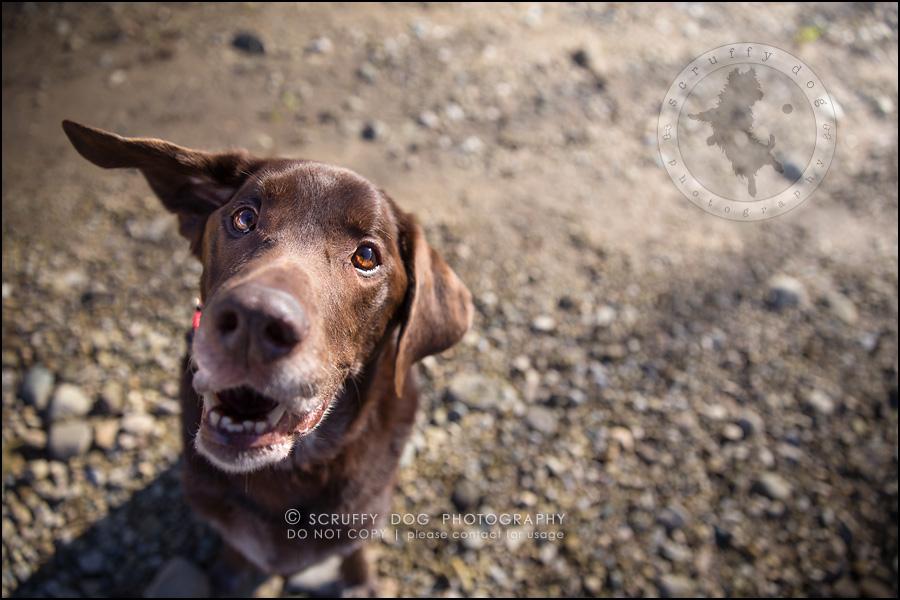 17-waterloo-ontario-best-professional-dog-photographer-max shoup-53