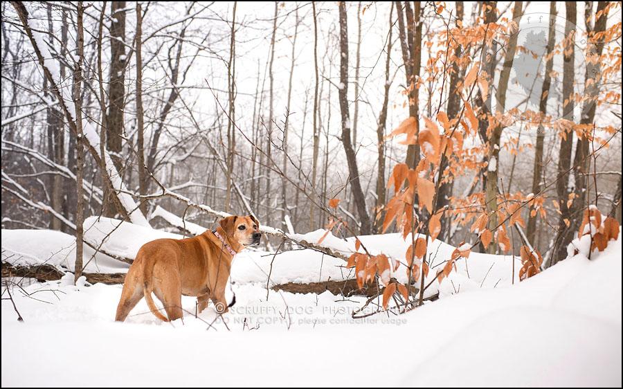 17-waterloo-ontario-professional--dog-photographer-best-makeda slinger-211