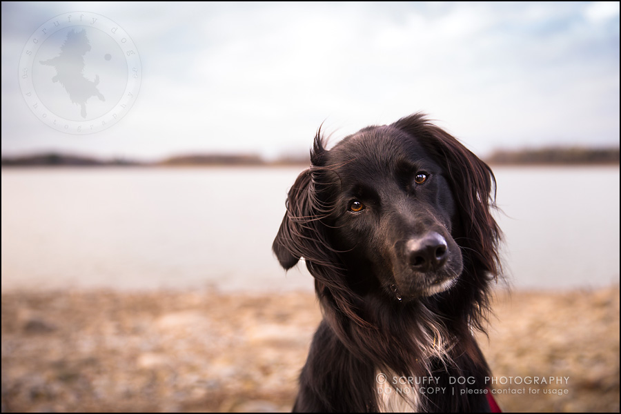 17-waterloo-ontario-professional-dog-photographer-hudson manning-843