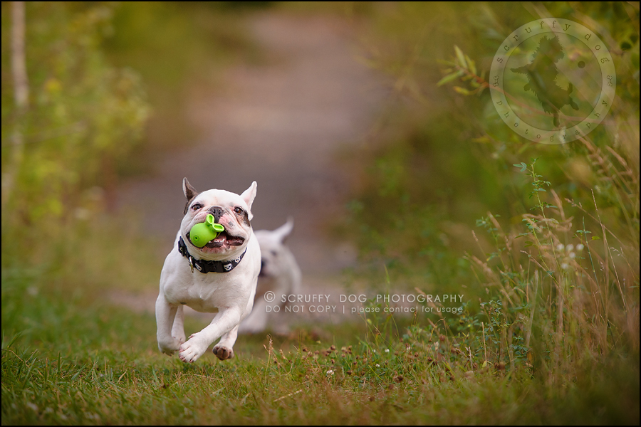 17_guelph_ontario_pet_photographer_best_dog_oliver eleanor fleming-298