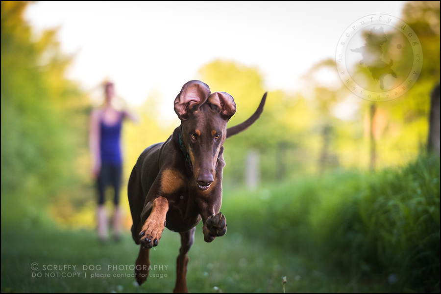 17_guelph_ontario_pet_photographer_best_dog_reese hunsberger-518