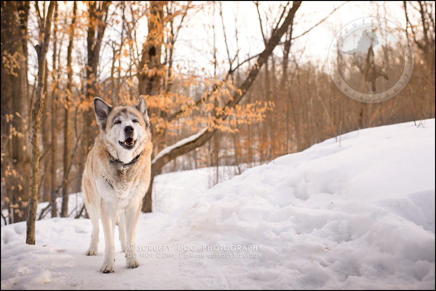 17_toronto_ontario_dog_stock_photography_grace zoe carr-621-Edit