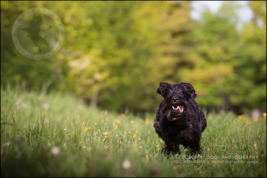 17toronto_ontario_dog_stock_photography_geordi jessie ladrillo-468