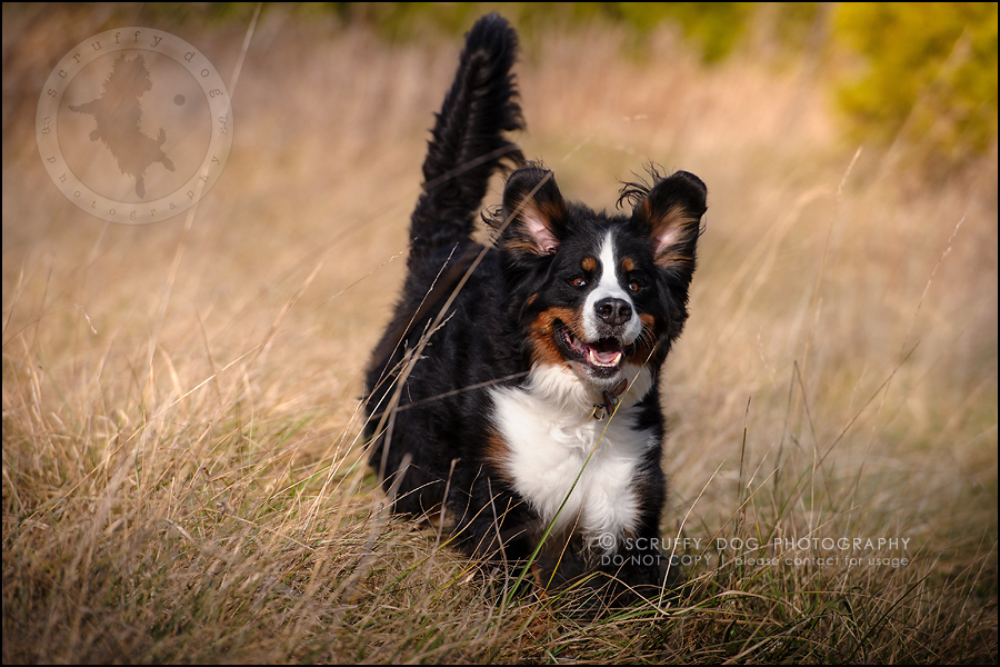 18-toronto-ontario-professional-dog-photographer-henry martha-215