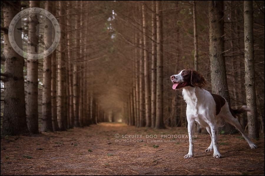 18-toronto-ontario-professional-pet-dog-photographer-jake boucher-598