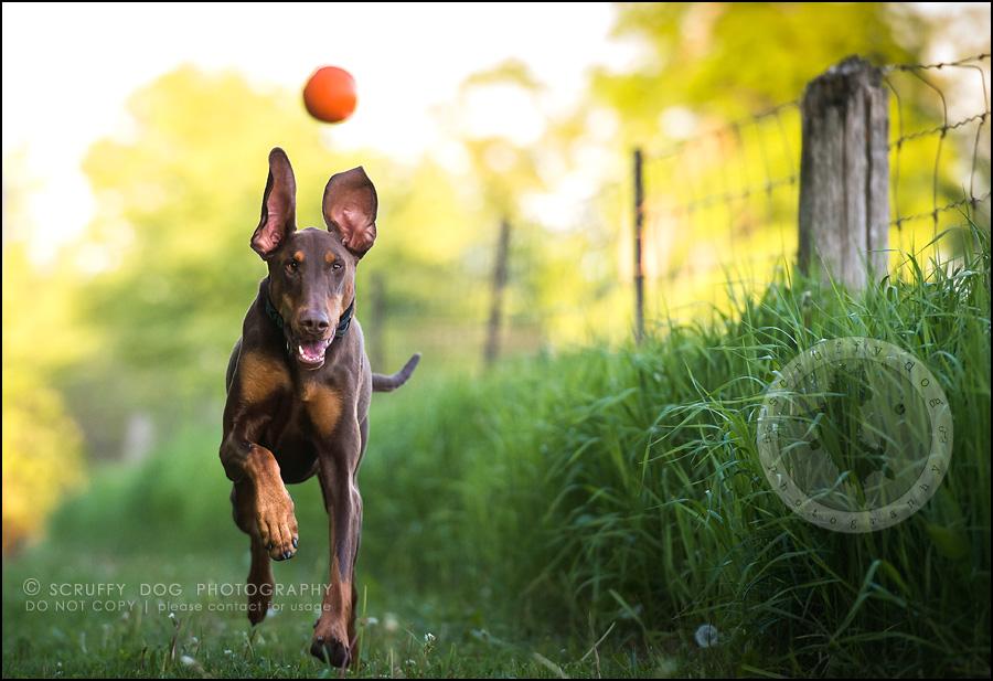 18_guelph_ontario_pet_photographer_best_dog_reese hunsberger-551