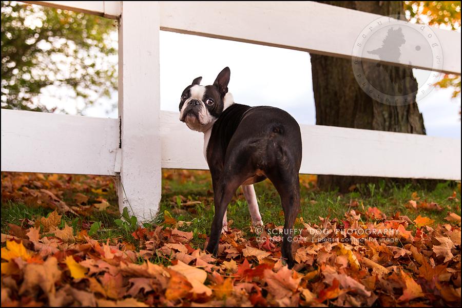 18_kitchener_ontario_pet_photographer_best_dog_princess dot carroll-36