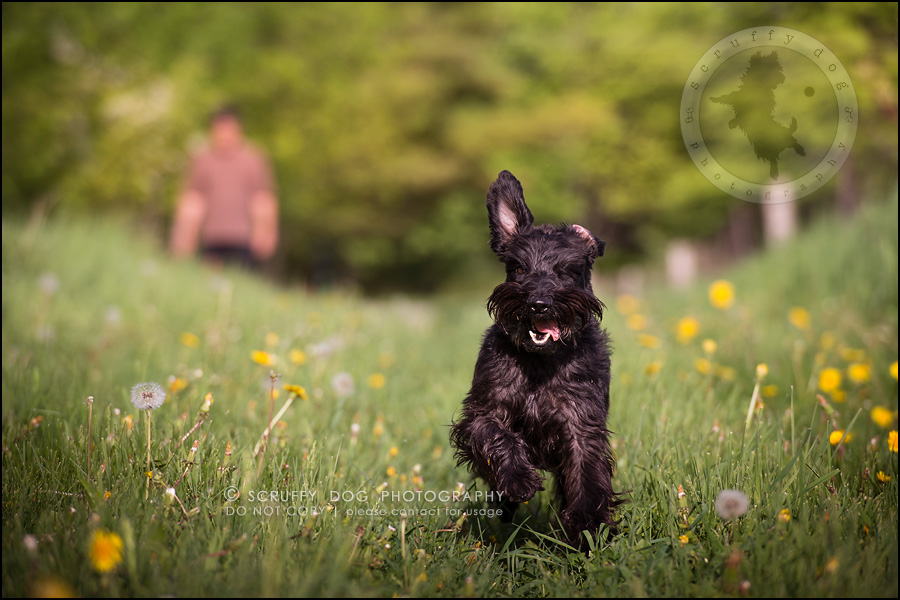 18toronto_ontario_dog_stock_photography_geordi jessie ladrillo-401