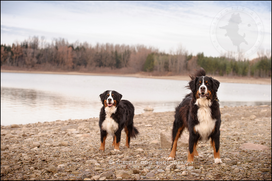 19-toronto-ontario-professional-dog-photographer-henry martha-317