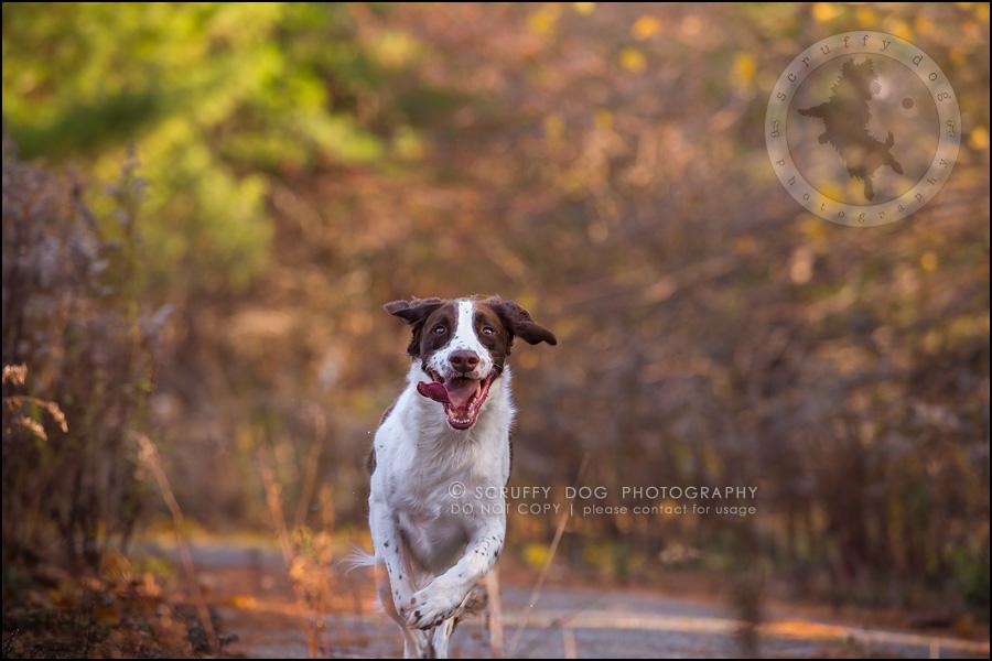 19-toronto-ontario-professional-pet-dog-photographer-jake boucher-378