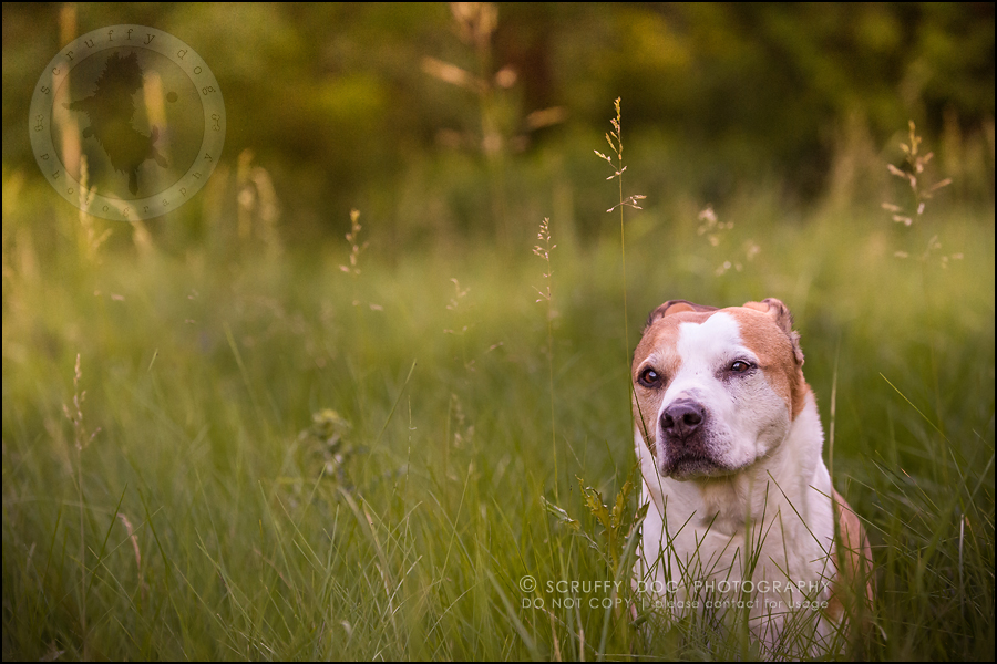 19-toronto-ontario-professional-pet-photographer-jade perry-411